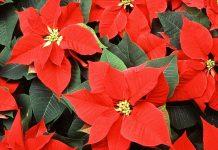 send flowers online to Delhi