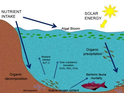 Eutrophication and Aquiculture